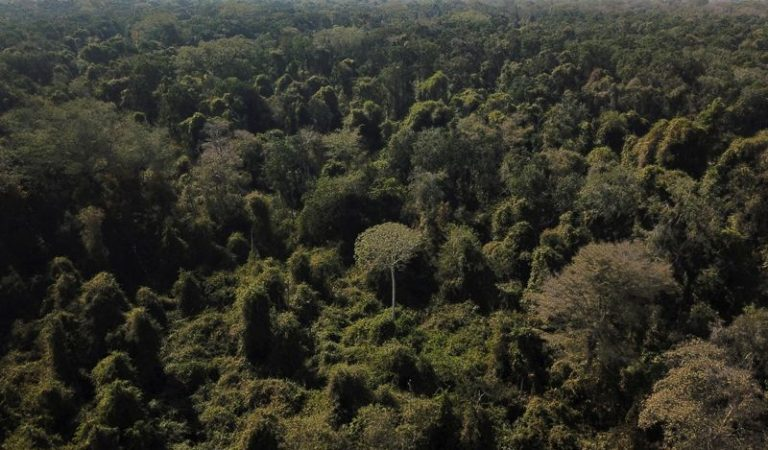 Brazil to bring forward goal to end illegal deforestation, VP says